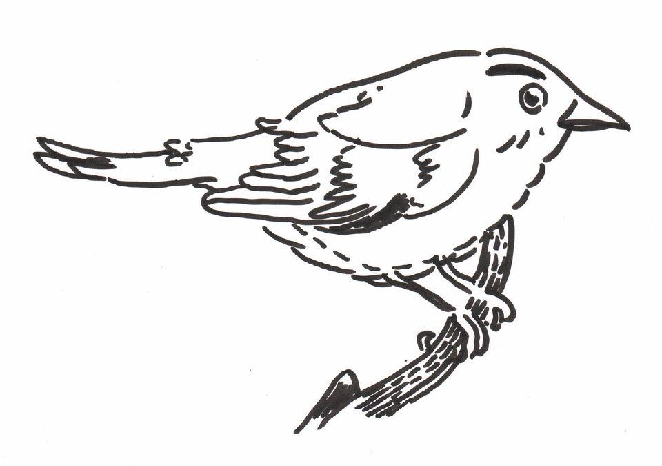 megaXpres præsenterer: Birds and Robotics / Arik / Julian
